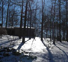 Sun and Snow on the Wooded Hillside by Charldia