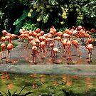 Birds Park 3 by Adri  Padmos