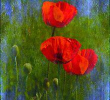 Poppies by Veikko  Suikkanen