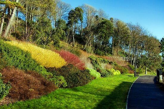 Winter Colours ~ Langmoor-Lister Gardens by Susie Peek