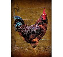 A Country Rooster Photographic Print