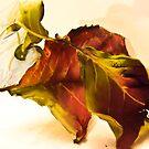 Dry Hydrangea Leaf by Sarah Butcher