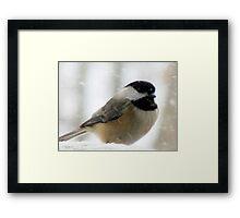 Chickadee In Snowstorm Framed Print