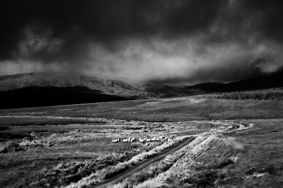 storm clouds by conalmcginley