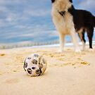 Beach Ball by { wetnosefotos.com  }