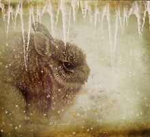 Frosty Paws by Barbara Zuzevich