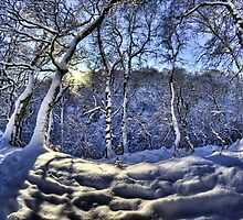 Sun through the snow by Guy Carpenter