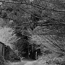 Woodland Walk by Dean Messenger