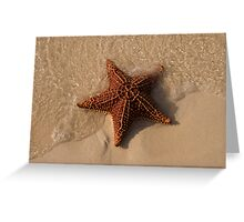 Starfish, Rose Island, Bahamas Greeting Card