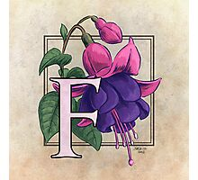 F is for Fuchsia Photographic Print