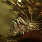 Lionfish head details by orkology