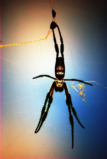 Golden Orb Spider by AccidentalArt