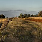 Back road to Parkes Radio Telescope NSW by Frank Moroni