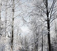Grand winter day by Mag Huybreghs