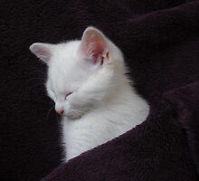oh so Cute by Dawn B Davies-McIninch