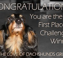 The Love of Dachshunds Challenge Winner Banner  by Caroline Hannessen
