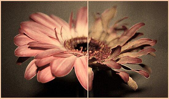 Life of a Flower  by Tam  Locke