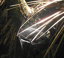 Silver Cobweb Praslin island by maashu