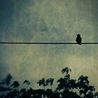 bird on a wire by Angel Warda
