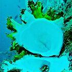 Reef ~ Hidden Pearl of the Ocean. by NICK COBURN PHILLIPS