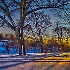 Winter Light  by LudaNayvelt