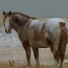 Roanie in the snow, Montana horse by Donna Ridgway