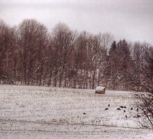 turkeys winter field  by vigor