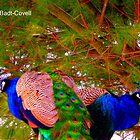 Pair O' Peacocks by Deb  Badt-Covell