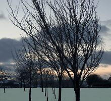 Snow Trees by Peter Elliott