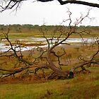 Fallen Tree- Marshes of Serengeti by maashu