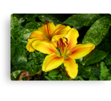 Bright Yellow Lilies Canvas Print