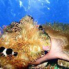The sea anemone. by debjyotinayak