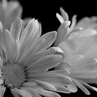 Flowers in Black & White by Lynn  Gibbons