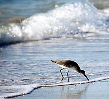The Sandpiper's World by Renee Blake