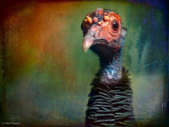 Portrait of an Occelated Turkey by alan shapiro