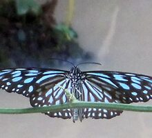 Thai Butterfly card 1 by DAdeSimone