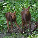 Twin Moose- Park City, Utah by FoxSpirit