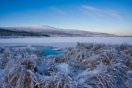 frosty by conalmcginley