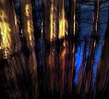 Phantoms of the Forest by linmarie