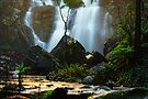 Stevensons Falls - Great Otways NP by Trudi's Images