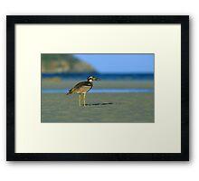 Beach Stone-curlew Framed Print