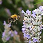 Busy bee by danimac