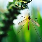 Crane Fly Adventure by RyanLeePhoto