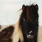 The Unnerving Eye, Montana Horse photo by Donna Ridgway
