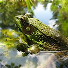 Frog Heaven by sillyfrog