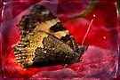 First butterfly of the Year by missmoneypenny