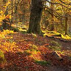 Padley Woods Grindleford Derbyshire  by Roy Childs