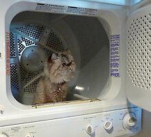 Laundry Astronaut by Roland Pozo