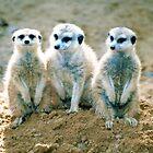 We Three Kings by RebeccaBlackman