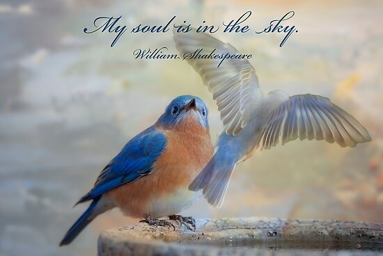 My soul is in the sky . . . by Bonnie T.  Barry